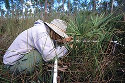 Hillary Cooley Cataloging Vegetation