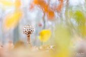 Mushrooms   Pilze
