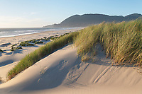 Dunes and dunegrass at Nehalem State Park, Oregon