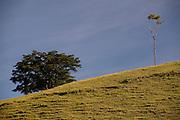 Viana_ES, Brasil...Arvore em uma paisagem proximo a antiga Rota Imperial, tambem conhecida com o Estrada Pedro de Alcantra...A tree in the landscape next to the ancient Rota Imperial, know as Dom Pedro de Alcantara road...Foto: LEO DRUMOND / NITRO