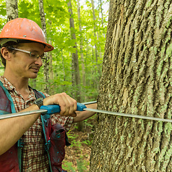 Tyler Pelland, a forester with LandVest, measures a tree in East Haven, Vermont.