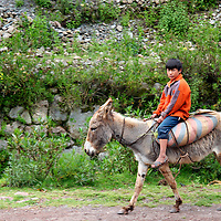 Americas, South America, Peru.  Young Peruvian boy rides a donkey along a road in the Sacred Valley.