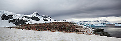 Cuverville Island, Gentoo penguin colony, Antarctica