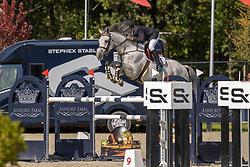 Liefsoens Alexander, BEL, Echo van Spalbeek Z<br /> Belgian Championship 7 years old horses<br /> SenTower Park - Opglabbeek 2020<br /> © Hippo Foto - Dirk Caremans<br />  13/09/2020