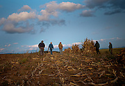 Old order Mennonite family and friends shocking corn.