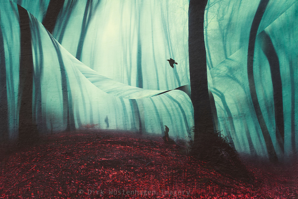 Forest on a misty autumn day - manipulated photograph<br /> Art prints & more--> https://bit.ly/layer_upon_layer_RB