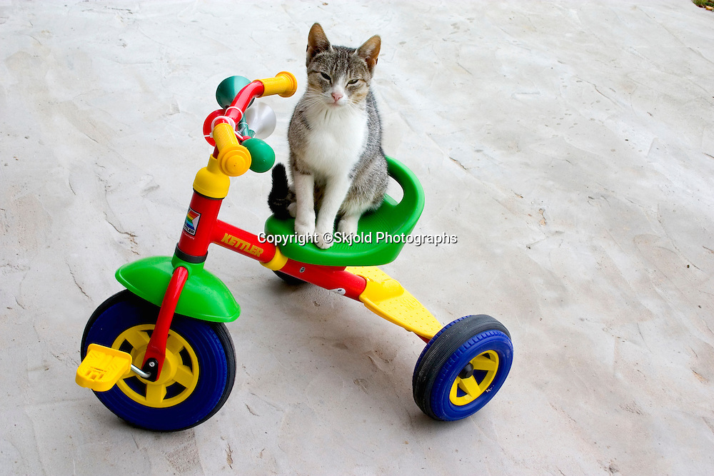 Cat sitting on plastic multicolored tricycle.  Zawady   Central Poland