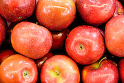 A pile of fresh, ripe red Apple