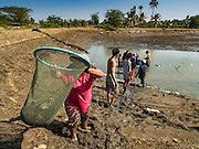 01 MARCH 2016 - CHACHOENGSAO, THAILAND: Workers harvest shrimp on a shrimp farm in Chachoengso province of Thailand. Thailand is one of the leading shrimp exporters in the world and aquaculture is an important component of the Thai export economy. Thai government officials have warned that there may not be enough water in the country's reservoirs to provide adequate water for farming, including fish and shrimp farms, industrial needs and domestic consumption. The government has told rice and fish farmers to reduce their use of water, and if necessary to reduce their crops. The current El Niño weather pattern is being blamed for the drought. The 2015 rainy season was well below normal and the 2016 rainy season could start two months late.    PHOTO BY JACK KURTZ
