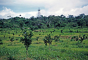 Citrus planation in countryside in field with oil drilling rig in southern oilfield, Trinidad 1962
