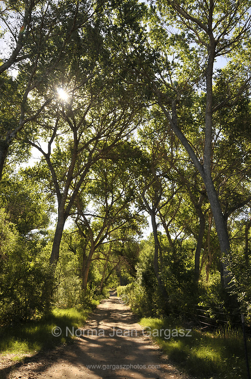 A canopy of trees in a riparian area covers the Anza Trail along the Santa Cruz River, Tubac, Arizona, USA. The Santa Cruz River is partially fed with reclaimed water.