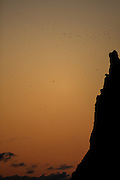 Fugler i solnedgang på Runde | Birds at sunset, Runde, Norway.
