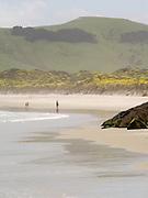 Tourist's play in the waves and water of Allan's Beach, near Portobello, on the Otago Peninsula, near Dunedin, New Zealand