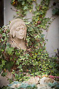 Close up of statue head in creeping plant at Christian cemetery, Casablanca, Morocco