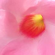 Floral close-up, art photo,