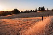 Meadow near Pine Grove, Amador County, California