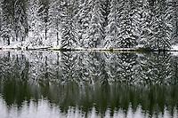 New snow on trees lining shoreline reflected in lake Cypress Hills Park Saskatchewan Canada