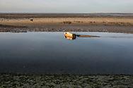 26122015. Baie de Somme. Cayeux-sur-Mer.