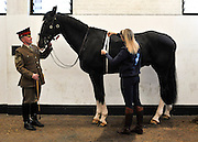 © Licensed to London News Pictures. 02/05/2013. London, UK. Fortune is inspected by a groom. The Household Cavalry receive a horse health check at Hyde Park Barracks from pet charity Blue Cross in order to encourage horse owners to take part in the National Equine Health Survey (NEHS). Photo credit : Stephen Simpson/LNP