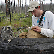 Matt Seidensticker, a biologist from the Owl Research Institute out of Charlo, Montana. studying and recording information on fledging Northern Hawk Owl.
