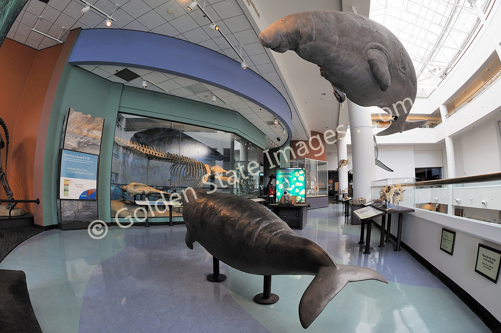 The San Diego Natural History Museum opened in 1933 and  and is the oldest scientific institute in Southern California. It includes exhibits on dinosaurs, fossils, and local habitats. <br /> <br /> In 2001, it reopened after a major reconstruction, including a modern 90,000 square foot addition than more than doubled the size of the museum. <br /> <br /> The Museum was founded in 1847 by a group of amateur nature enthusiasts, it remains an active research institute.