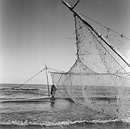 A salmon netter closing the pocket of a 'jumper' net after removing fish from the trap at low tide at Kinnaber, Angus.<br /> Ref. Catching the Tide 46/00/05 (1st August 2000)<br /> <br /> The once-thriving Scottish salmon netting industry fell into decline in the 1970s and 1980s when the numbers of fish caught reduced due to environmental and economic reasons. In 2016, a three-year ban was imposed by the Scottish Government on the advice of scientists to try to boost dwindling stocks which anglers and conservationists blamed on netsmen.