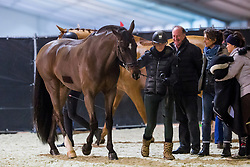Barbancon Mestre Morgan, ESP, Sir Donnerhall II Old<br /> Jumping Mechelen 2019<br /> © Hippo Foto - Sharon Vandeput<br /> 27/12/19
