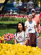 """03 MAY 2020 - PELLA, IOWA: People walk through a park in downtown Pella, Iowa. Pella is a small community in central Iowa. The town's economy is driven by tourism and the Tulip Festival, the largest tourist event of the year, has already by canceled for 2020 because of fears that the festival could become a COVID-19 (Coronavirus/SARS-CoV-2) """"Super Spreader"""". The Governor of Iowa reopened 77 of Iowa's 99 counties. The counties that were reopened have reported low incidences of Coronavirus. Marion County, where Pella is located, has reported 12 cases of Coronavirus. There have been 9,169 confirmed cases of Coronavirus in Iowa, including 1,476 cases in the Des Moines area, less than one hour away. Many people from Des Moines drove to Pella this weekend to see the tulips for which the town is famous.     PHOTO BY JACK KURTZ"""