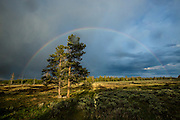 Rainbow after summer storm in Yellowstone National Park