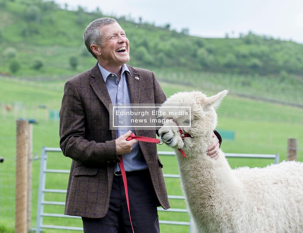 Scottish Lib Dem leader Willie Rennie gets more than he bargained for on a campaign visit to Bobcat Alpacas in the Pentland Hills outside Edinburgh.<br /> <br /> © Dave Johnston/ EEm