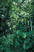 Monteverde Cloud Forest Preserve, Costa Rica, rainforest, green, trees, Continental Divide at 1440 meters