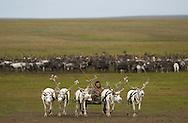 Nenets reindeer herder Stanislaw Ivanovich, Vaigatch Island, Siberia, Russia, Arctic