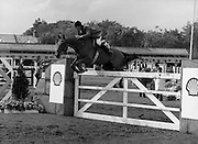 Shell Sponsored Events At The Dublin Horse Show.(R39).1986..07.08.1986..08.07.1986..7th August 1986..At the Horse Show Shell sponsored both the Speed and Power competition and The Puissance..The Speed and Power event was won by Hap Hanson riding 'Gambrinus'. The Puissance was shared by Capt John Ledingham (Irl) on 'Kilcoltrim' and Nick Skelton (GB) on 'Raffles Apollo' who both cleared the high wall at 7feet...Image shows Klaus Reinacher (GER) on 'Desiree' taking part in the Speed and power event.