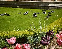 Rock Pigeon (Columba livia). Paris, France. Image taken with a Nikon N1V2 camera and  6.7-13 mm lens.
