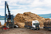 Logging and timber production and transportation at Craignure on the Isle of Mull in the Inner Hebrides of Scotland