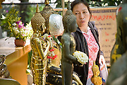 "Apr. 13, 2010 - Bangkok, Thailand: A woman cleanses a Buddha statue at a temple on Songkran in central Bangkok Tuesday. The tradition of spraying people with water started with cleansing the statues. Songkran is the Thai New Year's holiday, celebrated from April 13 - 15. This year's official celebrations have been cancelled because of the Red Shirt protests but Thais are still marking the holiday. It's one of the most popular holidays in Thailand. Songkran originally was celebrated only in the north of Thailand, and was adapted from the Indian Holi festival. Except the Thais throw water instead of colored powder. The throwing of water originated as a way to pay respect to people, by capturing the water after it had been poured over the Buddhas for cleansing and then using this ""blessed"" water to give good fortune to elders and family by gently pouring it on the shoulder. Among young people the holiday evolved to include dousing strangers with water to relieve the heat, since April is the hottest month in Thailand (temperatures can rise to over 100°F or 40°C on some days). This has further evolved into water fights and splashing water over people riding in vehicles. The water is meant as a symbol of washing all of the bad away and is sometimes filled with fragrant herbs when celebrated in the traditional manner. Photo by Jack Kurtz"