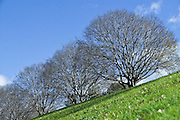 Bare Winter Trees against a blue sky