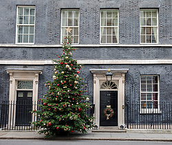 © Licensed to London News Pictures. 02/12/2017. London, UK. The Downing Street Christmas Tree. Photo credit: Rob Pinney/LNP