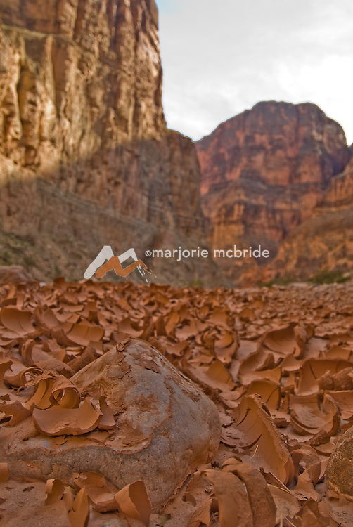 Curling mud chips in Kanab canyon on the Colorado River in the Grand Canyon, Arizona.