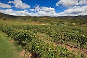 Hunter Valley Vineyard, NSW, Australia