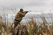 Photo No 11 of series - Hunter kills canvasback drake on open water marsh.
