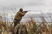 Photo No 11 of series - Hunter kills canvasback drake on open water marsh.