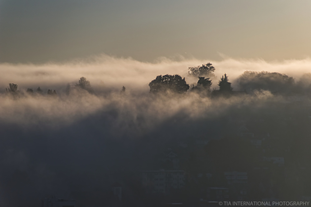 Fog Hover (Queen Anne Hill)