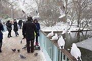 London, UK. Sunday 20th January 2013. Snow fall covering St James's Park, the oldest Royal Park in London. People come out to enjoy this winter scene, some feeding the birds.