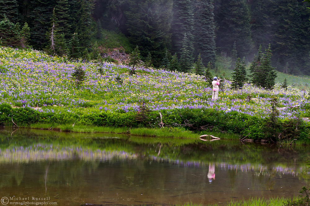 A tourist takes a cell phone photo of the wildflower display at Tipsoo Lake in Mount Rainier National Park, Washington State, USA