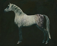 Horses are graceful and are also called noble animals. This painting of an Arabian horse doing a dressage exercise will certainly add value to any interior. Horses are unmissable in a rural environment. Not only in a country house will this painting of a horse come into its own. Also in a city environment horses can add just that little bit more to your interior. –<br /> -<br /> BUY THIS PRINT AT<br /> <br /> FINE ART AMERICA / PIXELS<br /> ENGLISH<br /> https://janke.pixels.com/featured/10-horses-white-horse-doing-dressage-exercise-jan-keteleer.html<br /> <br /> <br /> WADM / OH MY PRINTS<br /> DUTCH / FRENCH / GERMAN<br /> https://www.werkaandemuur.nl/nl/shopwerk/Arabisch-paard/767076/132?mediumId=1&size=70x55<br /> –<br /> -