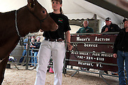 """Courtney Banach, a Vermont Technical College student, leads Sparkler, a heifer, around the auction ring as Casey Weiss calls out the cow's qualities from the auction block at right, and Joan Wortman looks on at left during the Green Acres herd dispersal sale Saturday, May 14, 2016. The Wortmans sold 88 animals, grossing about $93,000. """"So, we'll pay off half the mortgage on the farm,"""" said Joan Wortman. """"It's getting there."""" (Valley News - James M. Patterson) Copyright Valley News. May not be reprinted or used online without permission. Send requests to permission@vnews.com."""