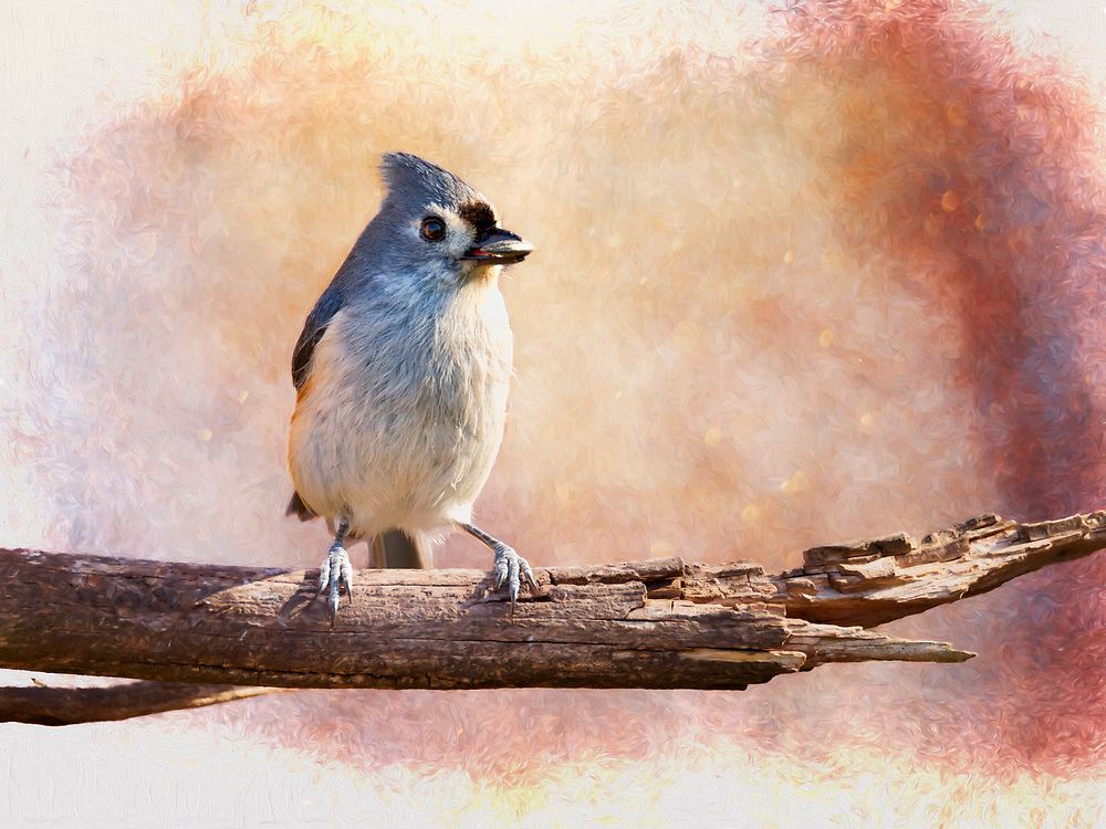 A Tufted Titmouse stopped by to accompany me for lunch one afternoon, so of coarse I had to click.