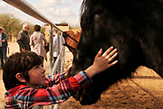 A young boy selects a horse to sponsor as a Christmas gift from his aunt at Equine Voices Sanctary and Rescue, Green Valley, Arizona, USA.