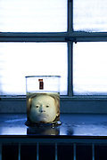 """Diogo Alves head preserved in formalin. Since its foundation, the city of Lisbon had problems with the supply of drinking water to the population. In order to solve this problem, in 1731 King John V begins the contruction of the long-touted """"Aguas Livres Aqueduct"""" wich has its construction completed in 1748, from this moment Lisbon would have 3 times more water than previously available.<br /> The aqueduct extends over 14,174 meters and consists of 127 arches along its route. Of all the arches, the most known is the one in the valley of Alcantara, the Arco Grande, is 65 meters high and is the largest pointed arch in the world.<br /> The other reason that made the Aqueduct famous is to have been the stage of nineteenth century's most famous serial killer in Portugal, Diogo Alves. Born in Spain, came to live in Lisbon at a very early age, known as the """"Assassino do Aqueduto das Aguas Livres"""" or also """"Pancadas"""". Diogo Alves is thought to have robbed and thrown from the Arco Grande area more than seventy people. No one ever found out how he got the key to enter the aqueduct and commit the crimes.<br /> Diogo Alves was convicted and hanged in 1841. His head was stored in formalin at the time so that medicine could studie his and be able to characterize the mind of a criminal.<br /> In 1911 is presented to the public the film """"Os crimes de Diogo Alves"""" the first Portuguese fictional film. 15/01/2012 NO SALES IN PORTUGAL"""